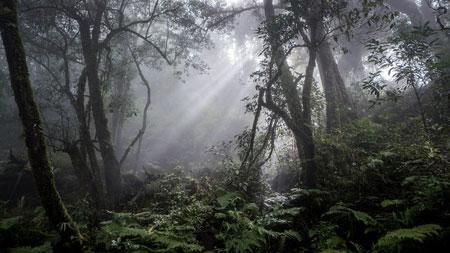 Chia theo độ cao, Fansipan có những vạt rừng nguyên sinh nhiệt đới rất đặc trưng cùng những loại cây hạt trần hàng trăm năm tuổi, tạo nên vẻ đẹp kì bí dưới màn hơi sương huyền ảo.