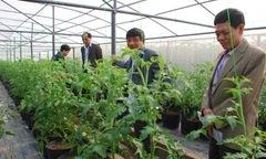 Tỷ phú đô la thích trồng rau