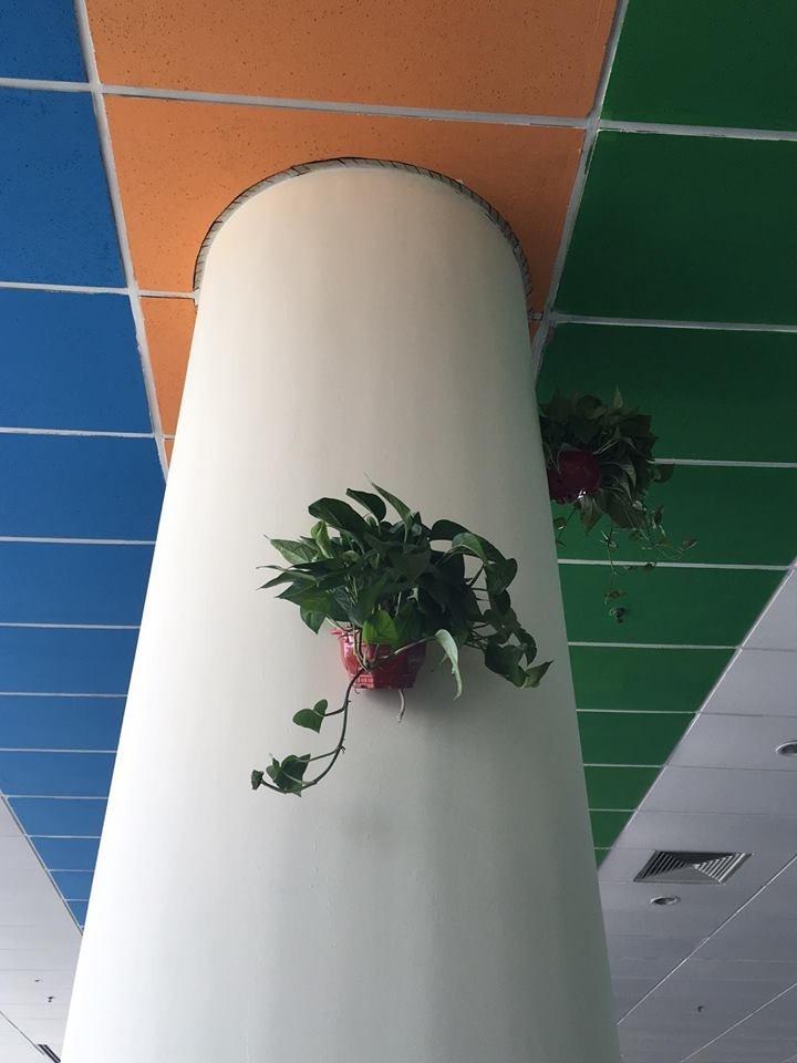Những cột trụ trong nhà ăn được trang trí bằng những giò cây xanh để tạo sự tươi mát. Trên trần nhà cũng được trang trí bằng ba màu logo FPT.