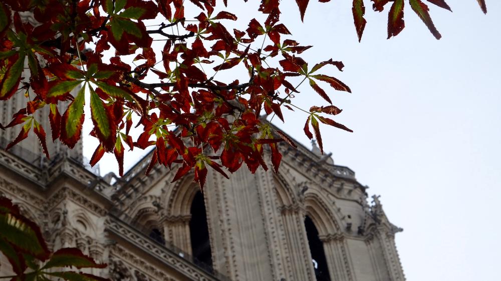 Lá vàng lá đỏ đã bắt đầu chuyển màu bên hông nhà thờ Đức Bà.