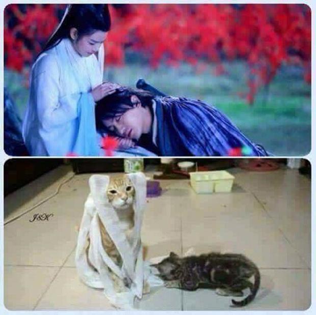 """Cô Cô và Dương Quá phiên bản """"mều"""""""