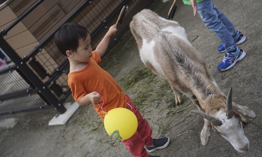 Tối 22/9, người FPT Japan tại Sendai và Tsurumi đã tổ chức Tết Trung thu cho các bé. Tại Sendai, các bé được đi tham quan vườn bách thú, trong khi ở Tsurumi, các FPT Small được tự tay làm đèn cốc và phá cỗ đón trăng.