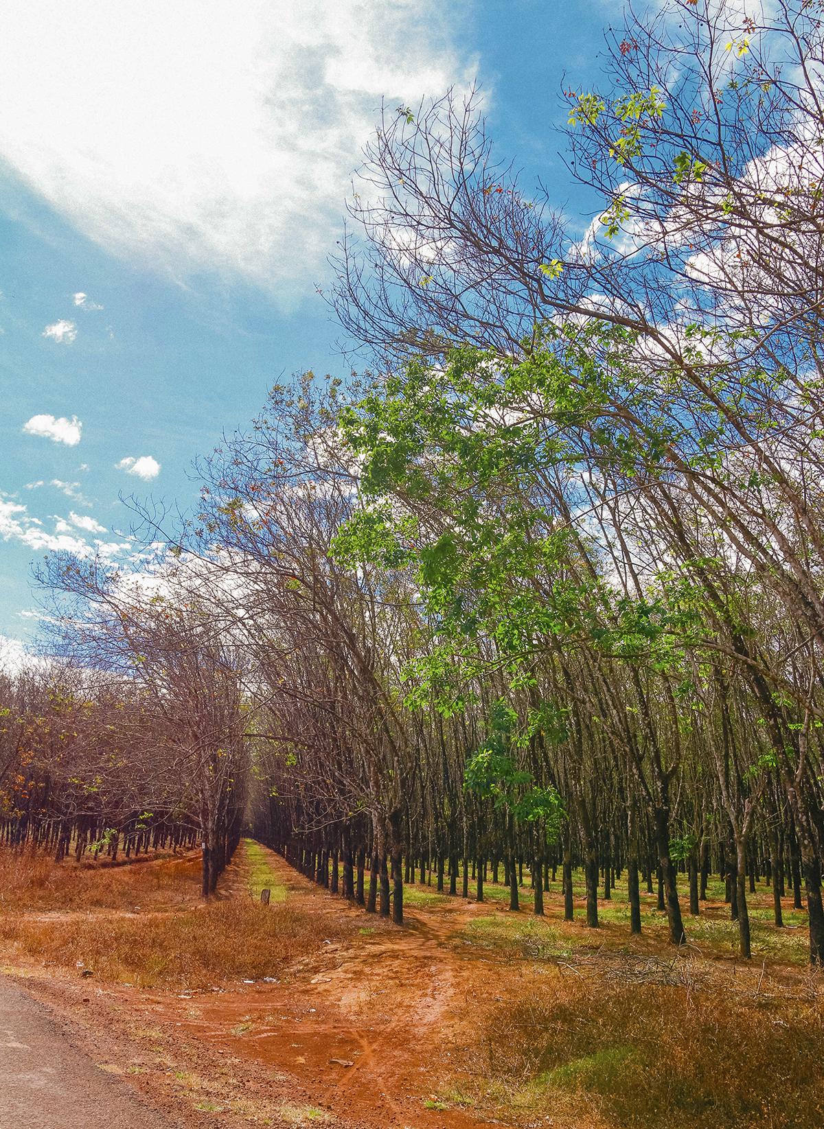 Cuối tháng 11, đầu tháng 12, vẫn còn lác đác những chiếc lá xanh mơn mởn nằm e âp kế bên những cành cây khô phủ đầy lá vàng, lá đỏ tạo nên sự đối lập đầy hài hòa đầy thú vị của thiên nhiên.