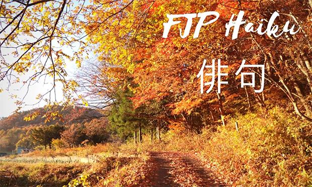 Haiku-7031-1543894416.jpg
