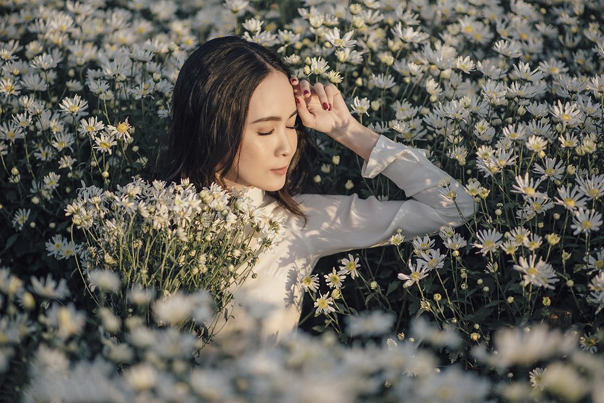 Hàng năm, cứ vào độ cuối tháng 11, đầu tháng 12, những bông hoa cúc họa mi trắng nhỏ, mỏng manh lại bung nở, khoe sắc dưới ánh nắng hanh vàng như báo hiệu một mùa đông lại đến.