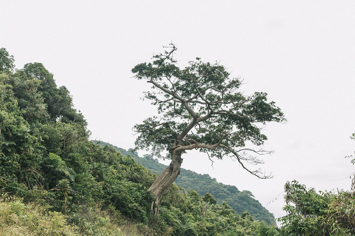 Trước khi ra biển, bạn có thể làm một vòng quanh đảo lớn để tận mắt nhìn thấy vẻ hoang sơ của nơi đây với những bãi đá gồ ghề, những cây cổ thụ nghiêng mình trên triền núi hay không gian xanh từ mặt biển, bầu trời đến cánh rừng trên đảo.
