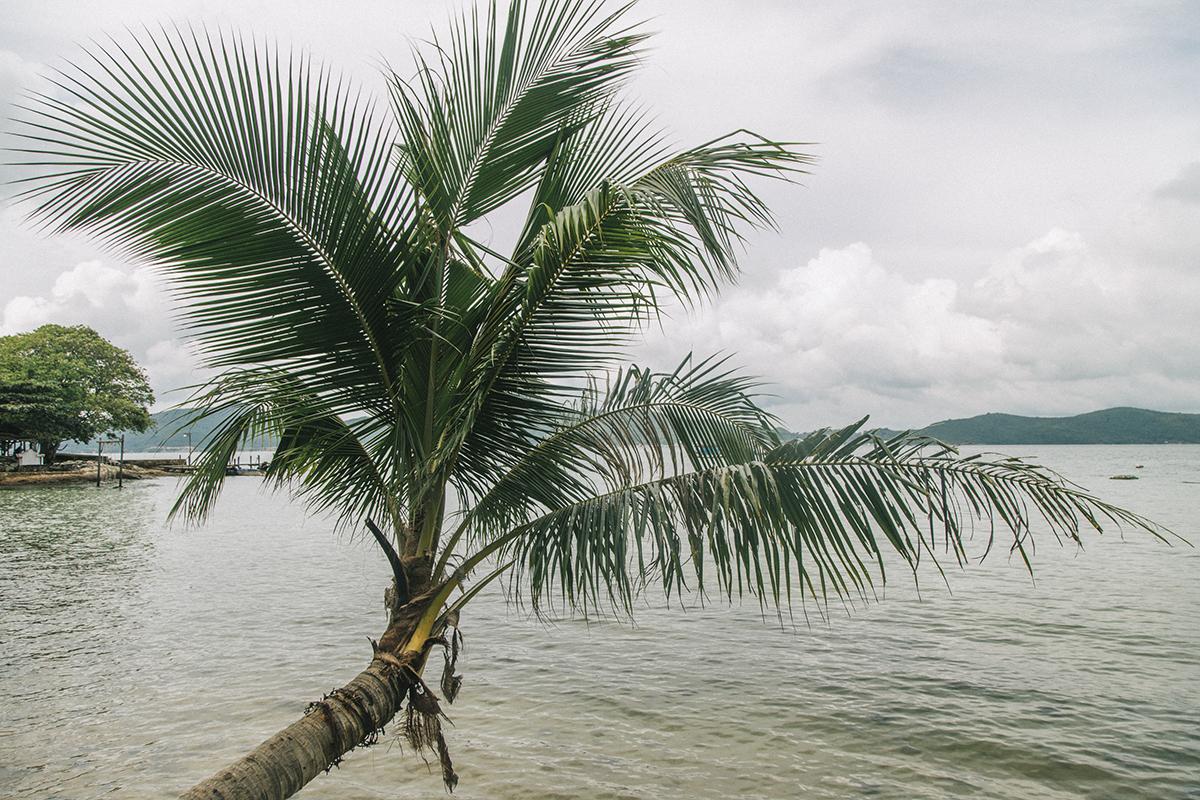 """Những cây dừa cao vút, duyên dáng vươn mình ra biển mang nét đặc trưng, tôn thêm vẻ đẹp của hòn đảo này. Trong đó, """"cây dừa Hawaii"""" nằm đổ ra biển là điểm check-in nổi tiếng ở Hòn Dầu."""