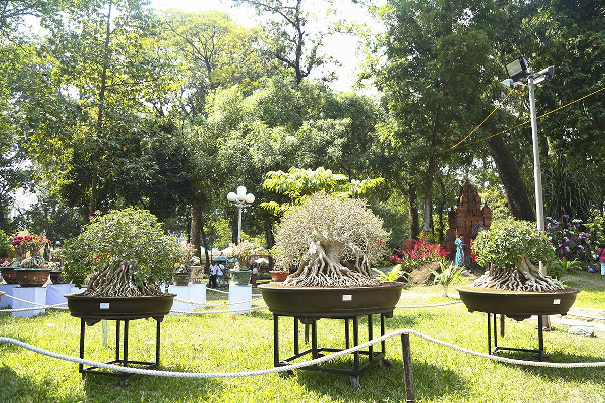 Những chậu cây cảnh độc đáo với bộ rễ phát triển, tạo hình thể hiện sự sung túc, thịnh vượng cho những ai sở hữu.