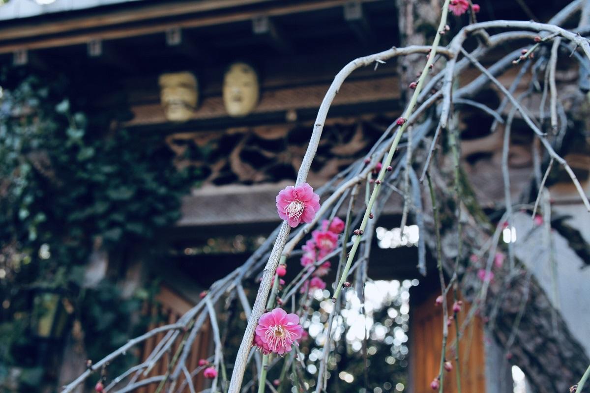 Lần đầu tiên đi onsite tại Nhật Bản, anh được trải nghiệm vẻ đẹp của hoa mơ Odawara tại tỉnh Kanagawa, Nhật Bản. Hoa mơ Nhật nở rộ vào tháng 3 khi mùa đông lạnh giá bắt đầu dịu đi, cũng là lúc báo hiệu mùa xuân đã đến.