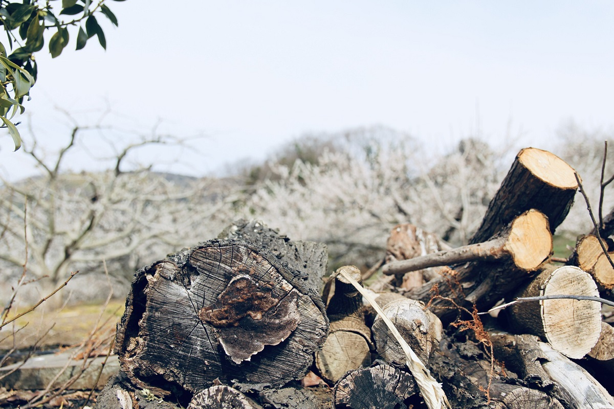 Dưới góc máy của anh Tấn, khung cảnh đất nước Nhật Bản đôi khi đẹp một cách đơn sơ.