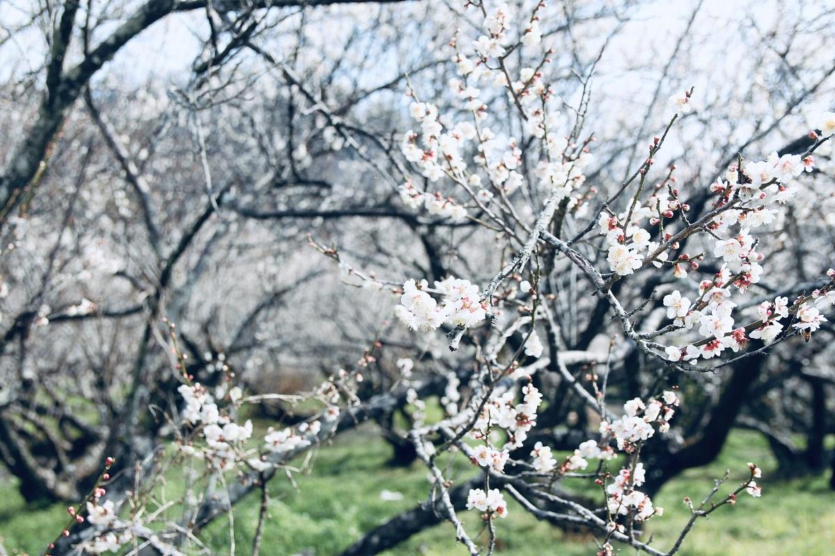 Với anh Tấn, dân onsite FPT Software khi qua Nhật Bản là cơ hội để trải nghiệm cảnh đẹp thiên nhiên, tận hưởng cảm giác thoải mái sau những giờ làm việc tận lực.