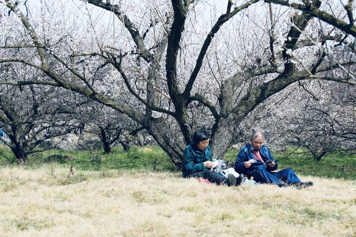 Tỉnh Kanagawa đông dân số thứ hai Nhật Bản, chỉ sau Tokyo. Từ sân bay ở Tokyo du khách chỉ mất 30 phút di chuyển tới Yokohama, thủ phủ của tỉnh Kanagawa. Thành lập ngày 13/11/2005, FPT Japan hiện đã có 14 văn phòng/trung tâm phát triển tại Khu vực Đông Bắc Á, trong đó có 2 văn phòng (Hiroshima, Đài Bắc) và 2 trung tâm phát triển (Toyota-shi, Kariya) đã được ký quyết định thành lập nhưng chưa tổ chức lễ khai truong chính thức. Với hơn 1.400 nhân viên đang làm việc trực tiếp tại Nhật Bản và hơn 8.000 người phục vụ gián tiếp cho thị trường Nhật Bản đang ngồi tại Việt Nam, năm 2019 FPT Japan hướng tới mục tiêu tăng trưởng doanh số 35% (270 triệu USD), nhân sự đạt 2.000 người. Trong 3 năm tới, FPT Japan sẽ nỗ lực lọt vào Top 20 các công ty IT lớn nhất Nhật Bản.