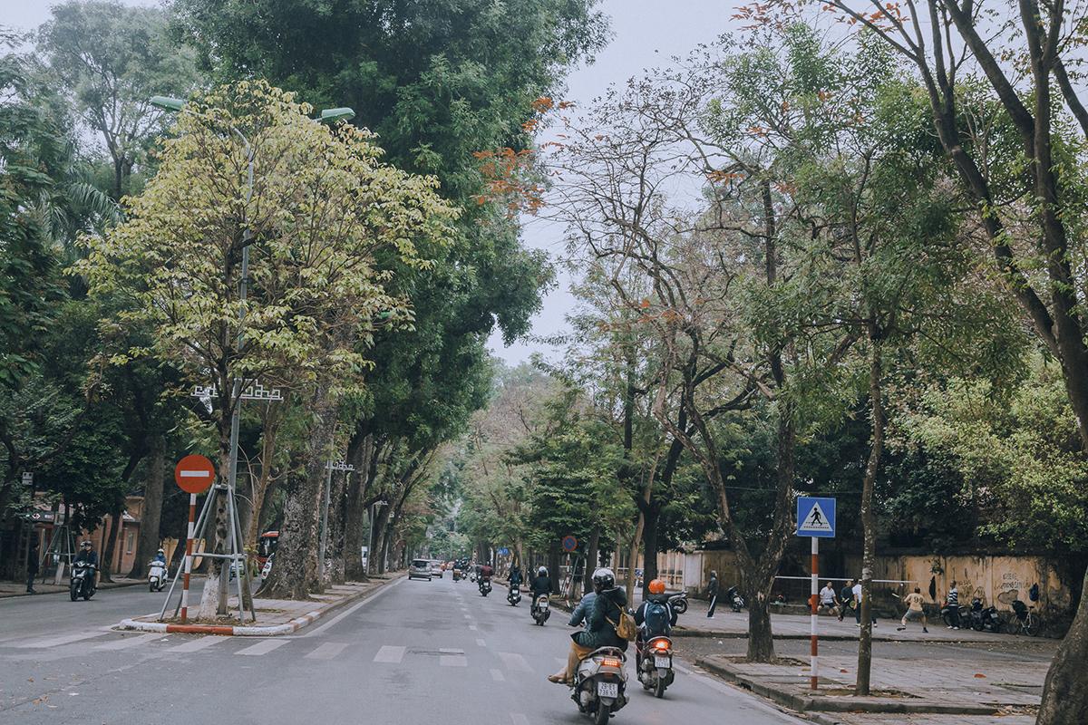 Nếu như Nhật Bản, Hàn Quốc... hấp dẫn du khách với những hàng cây lá dẻ quạt vàng, lá phong đỏ vào mùa thu thì Hà Nội lại khiến những người dân trong thành phố trầm trồ bởi sắc đỏ vàng tới muộn của những gốc bàng, gốc lộc vừng cổ thụ.