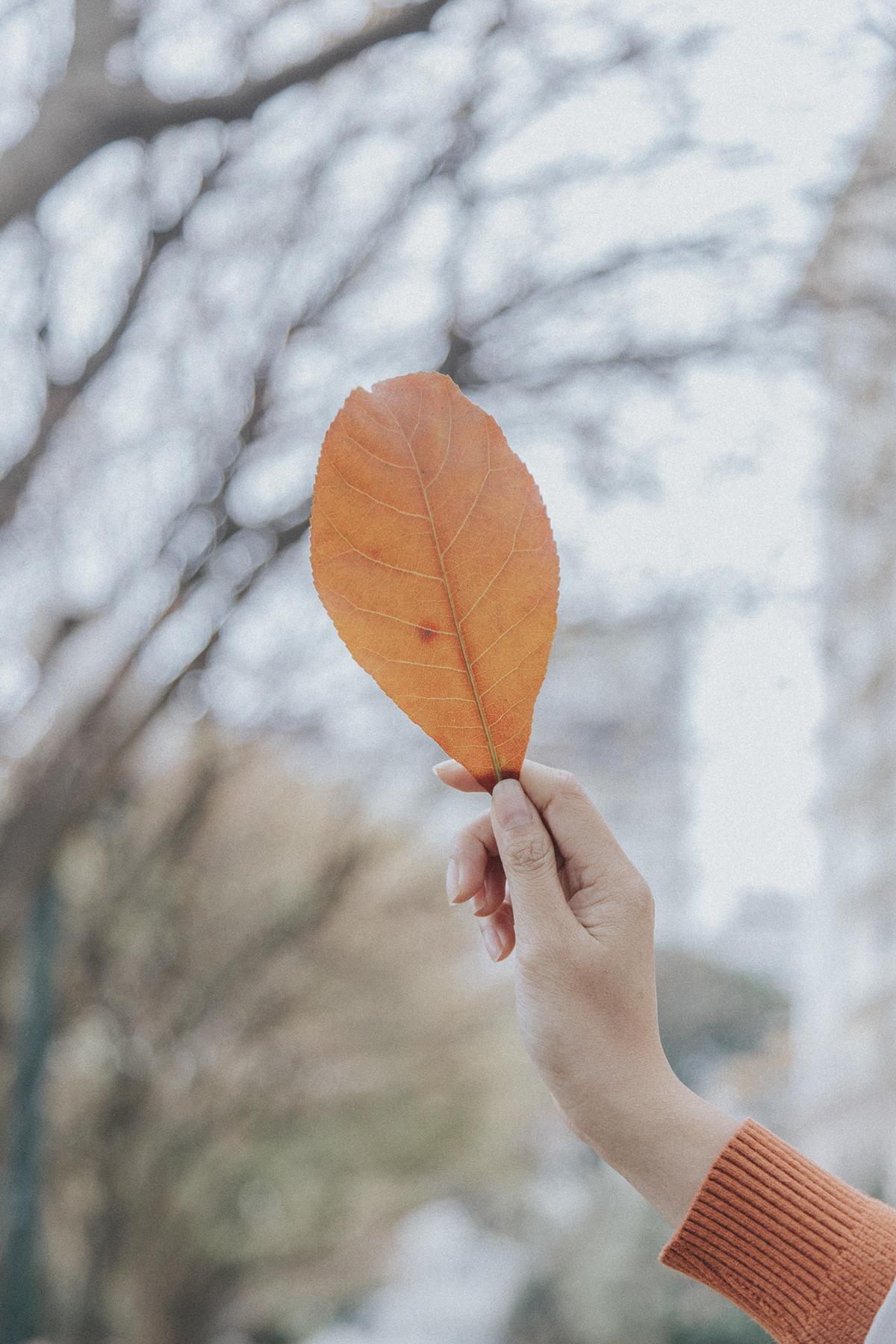 Những mùa hoa nối tiếp nhau đi qua, những mùa lá rụng cũng theo mùa về như một quy luật tất yếu. Tháng 3, lang thang trong cái nắng giòn tan đầu mùa, bàn chân bước qua những vạt lá khô nghe sột soạt, lòng tự hỏi: Hình như Hà Nội mùa nào cũng đẹp và nên thơ như thế, có phải không?