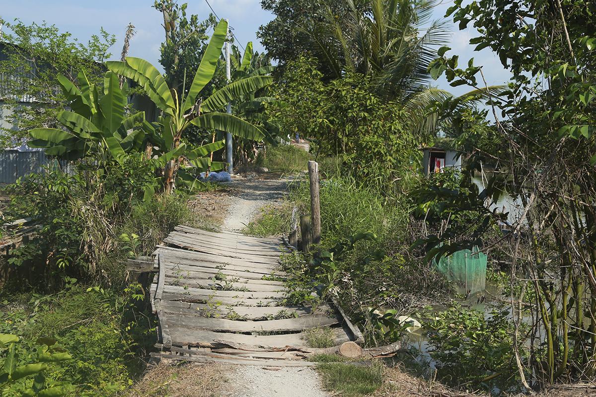 Cầu Ông Mẫn được ghép bằng ván gỗ bạch đàn và thân dừa sẽ được thay thế bằng cầu bê tông trong thời gian sắp tới.