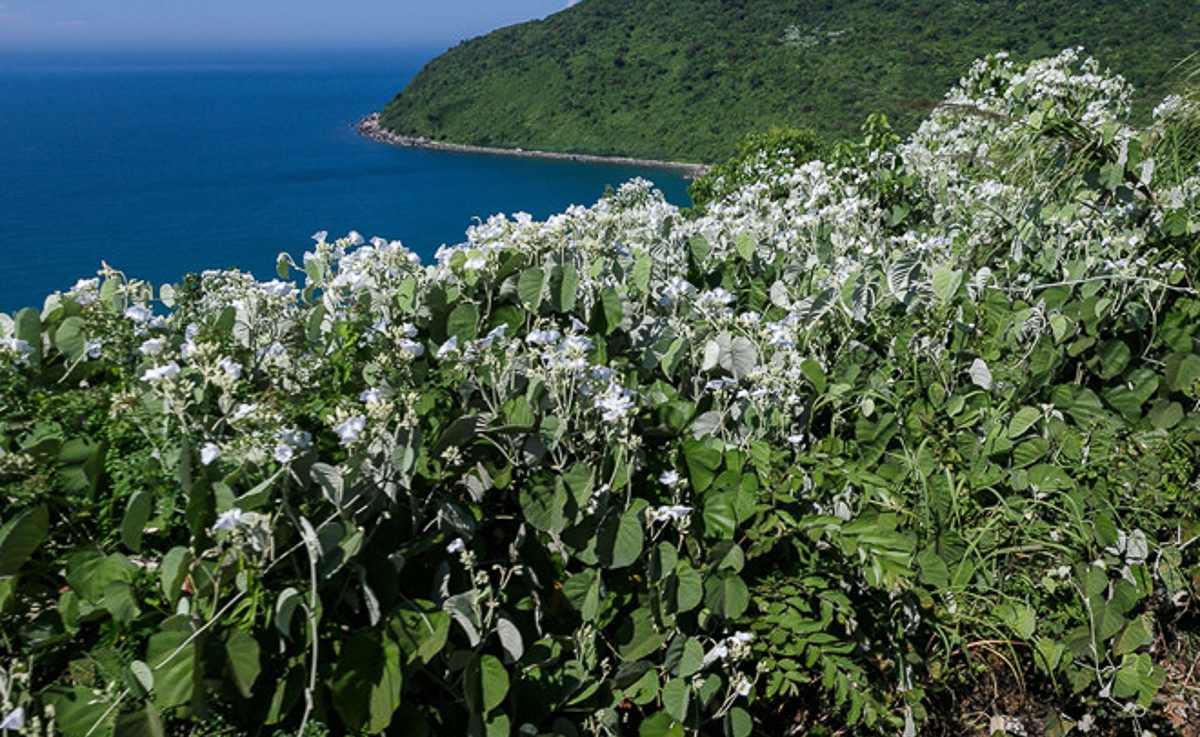 Từ trên toa, hành khách có thể thấy được toàn cảnh vịnh Đà Nẵngvới nước biển xanh biêng biếc dưới ánh nắng vàng óng của buổi chiều.Bên sườn đèo là những khóm hoa nở trắng xóa, xa bên kia bờ là thành phố Đà Nẵng cùng bán đảo Sơn Trà xanh ươm.