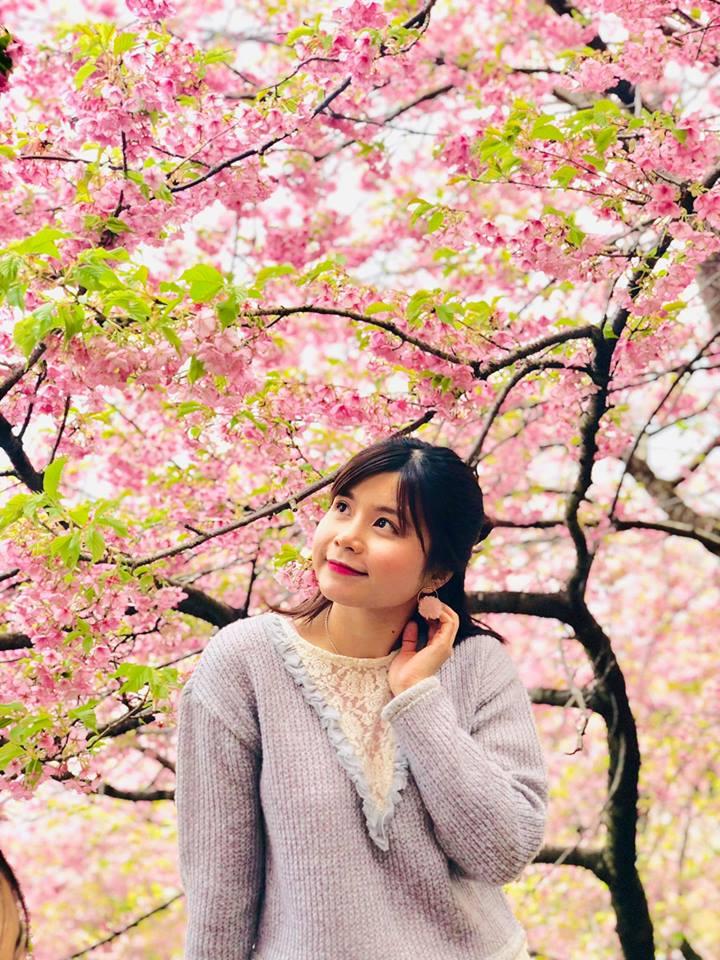 Tại công viên Nishihirahata ở thị trấn Matsuda, tỉnh Kanagawa, hoa anh đào nở rộ vào mùa xuân khiến du khách ngây ngất.