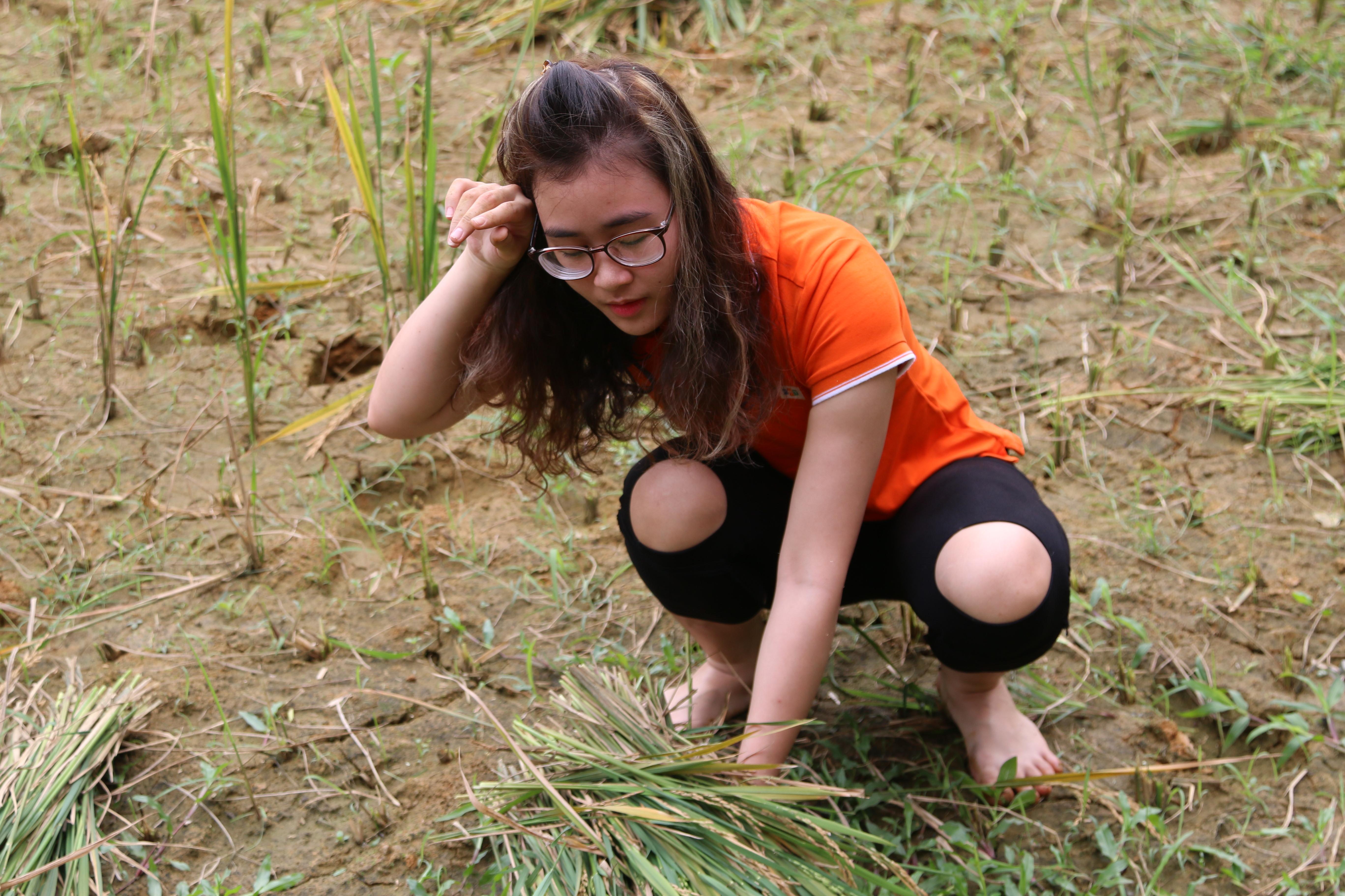 """Chị Lê Thị Huyền (FPT Software FWI) cho biết:""""Cuộc thi khiến tôi nhớ lại cảm giác trước đây phụ bố mẹ cấy gặt trên mảnh đất quê hương Thái Bình. Hôm nay, đặc biệt hơn khi được cùng anh chị em trong công ty thu hoạch lúa ngay trên làng công nghệ với sự hào hứng""""."""