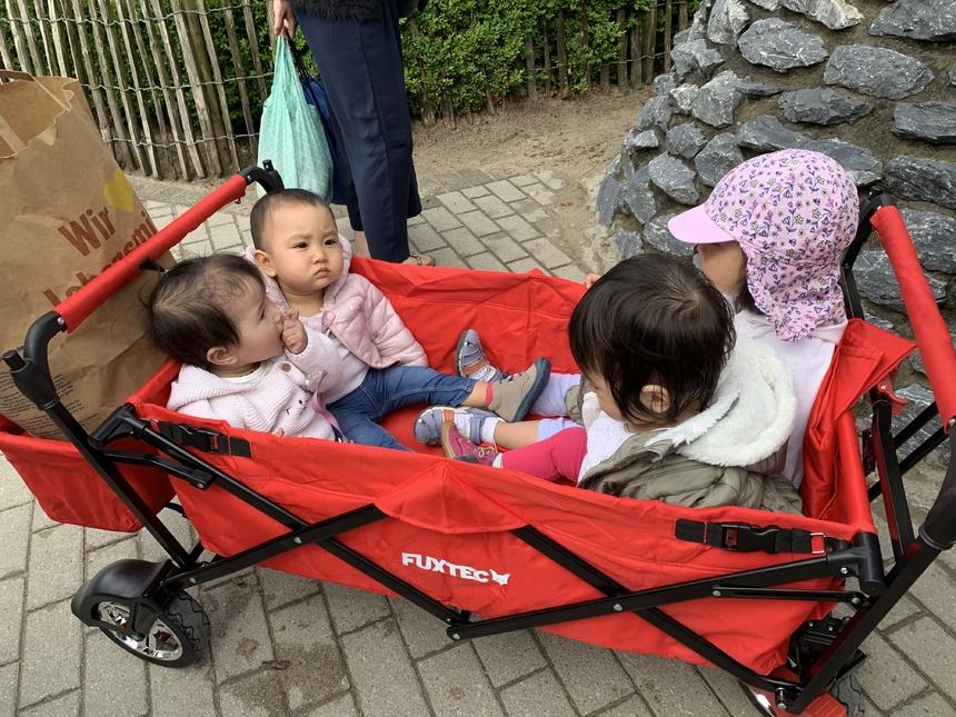 Các em bé được đưa đi cùng bố mẹ trong những chiếc xe đẩy đặc biệt.