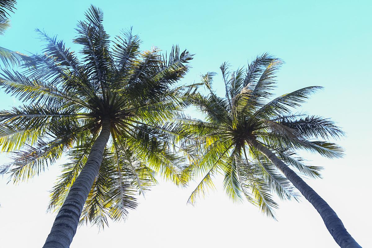 Bình Định nổi tiếng là tỉnh có diện tích trồng dừa nhiều thứ 2 cả nước (sau Bến Tre) với nhiều đặc sản liên quan đến cây dừa: Bánh tráng nước dừa, kẹp dừa,...