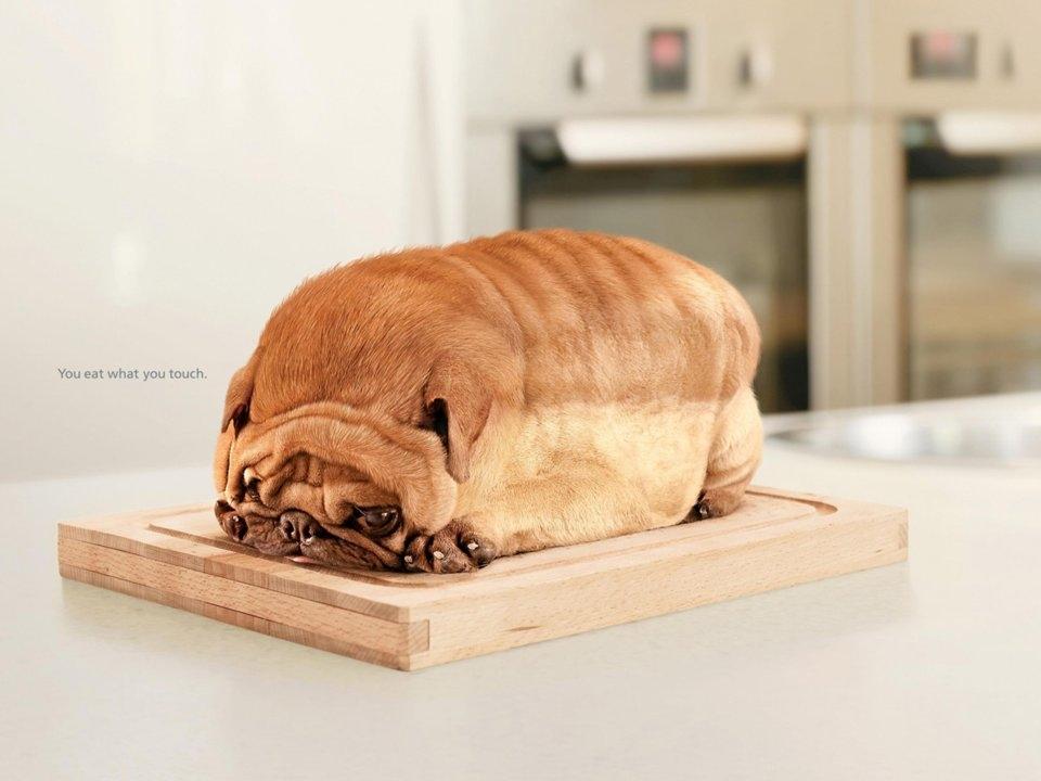 """Quảng cáo Life Buoy biến một chú chó thành bánh mỳ để nhấn mạnh tầm quan trọng của việc sử dụng xà phòng tắm: """"Bạn ăn thứ mà bạn chạm vào""""."""