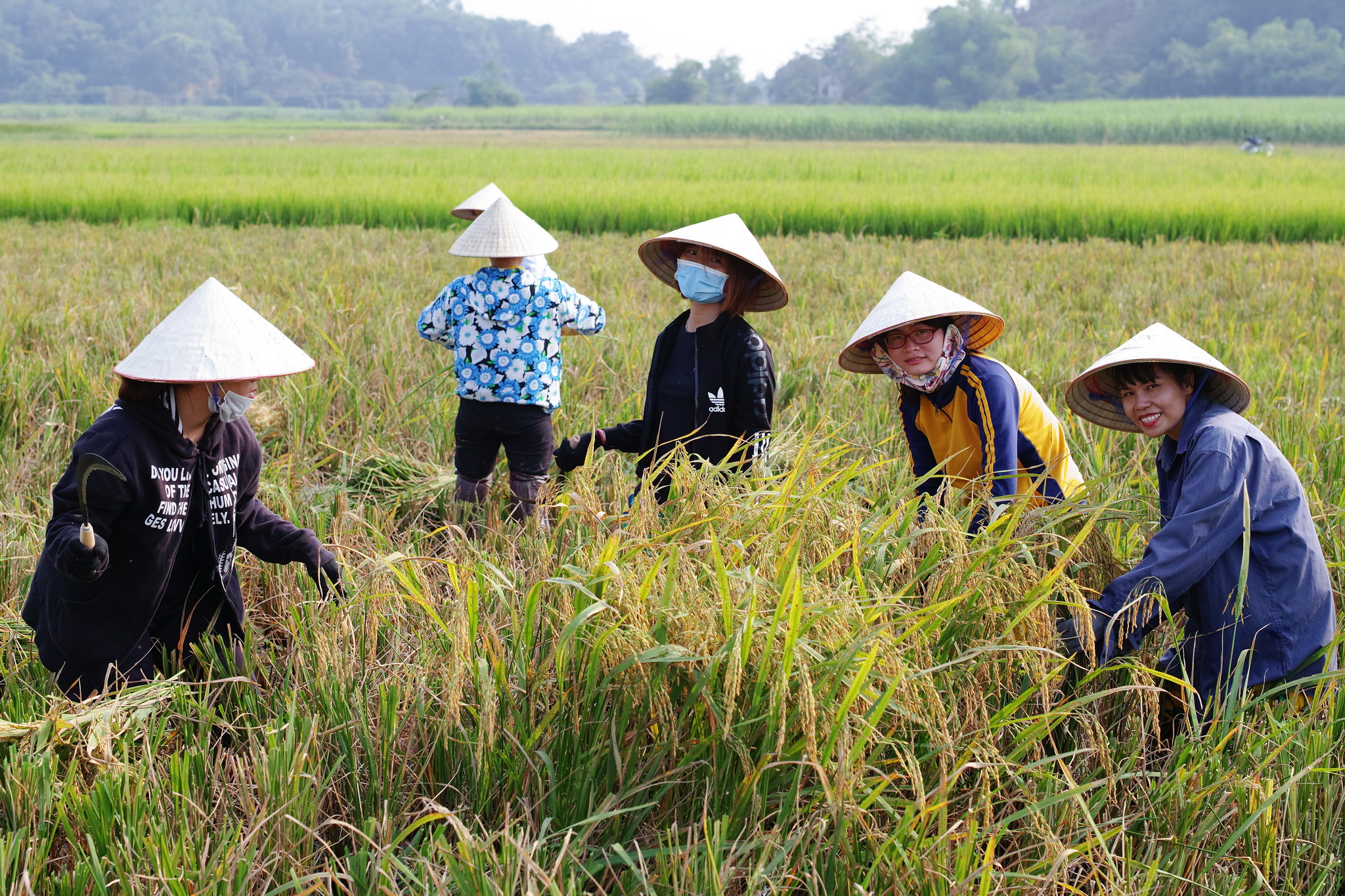 """9h sáng ngày 2/10, CBNV tập trung tại 17 Duy Tân và di chuyển về Thanh Hoá. Trong 1 tiếng đồng hồ, những tiếng cười giòn tan, những câu chuyện nhớ về ngày con bé được nói rộn ràng, vang vang cả cánh đồng. Sau hơn 10 năm mới được trải nghiệm lại công việc gặt lúa, chị Lê Huyền, nhân viên khảo thí FUNiX, bày tỏ: """"Cảm giác lạ lẫm nhưng đầy thú vị và ý nghĩa. Đặc biệt những ngày Hà Nội ô nhiễn như thế này được về nông thôn cảm giác rất tuyệt""""."""