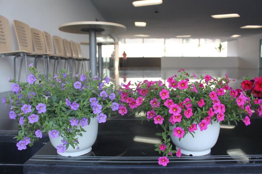 """Không chỉ trồng cây xanh, người nhà Phần mềm còn """"trang trí"""" cho văn phòng làm việc của mình bằng các loài hoa rực rỡ."""