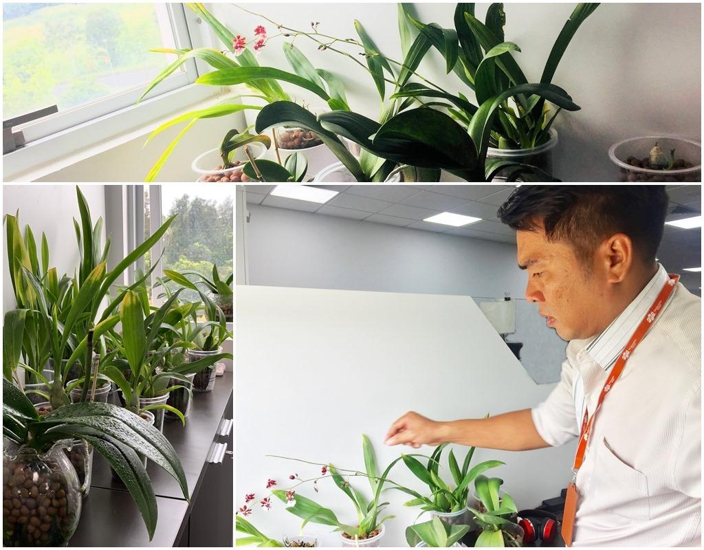 """Đây không phải lần đầu tiên những mầm xanh thiên nhiên xuất hiện trong văn phòng, nhất là với giống lan luôn được nhiều người ưa chuộng. Nhưng không phải ai cũng có thể biến sở thích ngắm lan, chăm lan thành một thói quen và thực hiện cả một hành trình """"nghiên cứu"""" về hoa lan tại văn phòng như anh Nguyễn Ngọc Châu – Phó phòng IT của FPT IS HCM."""