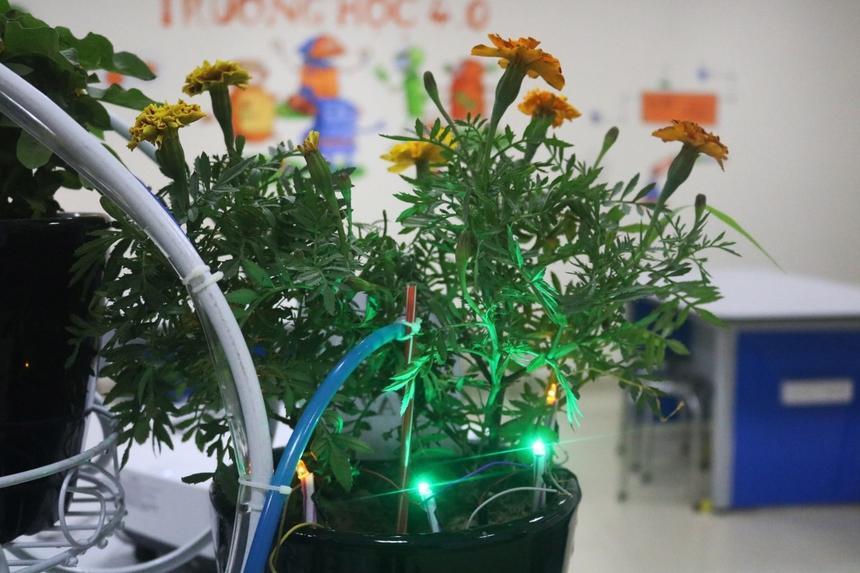 Tương tự hệ thống cảm biến độ ẩm, khi trời tối, đèn sẽ tự động bật sáng để vừa giúp cây mới trồng sinh trưởng tốt hơn, vừa chiếu sáng làm đẹp cảnh quan xung quanh.