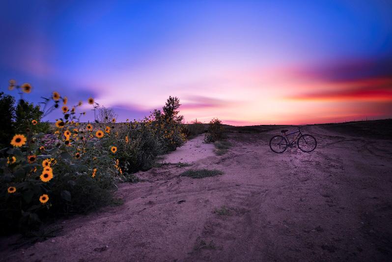 Khung cảnh một quả đồi ở bang Colorado khi đã gần cuối mùa hạ, khi hoa cúc dại nở nhiều dưới bầu trời hoàng hôn rực rỡ. Ảnh: Huỳnh Vũ Đông Nguyên