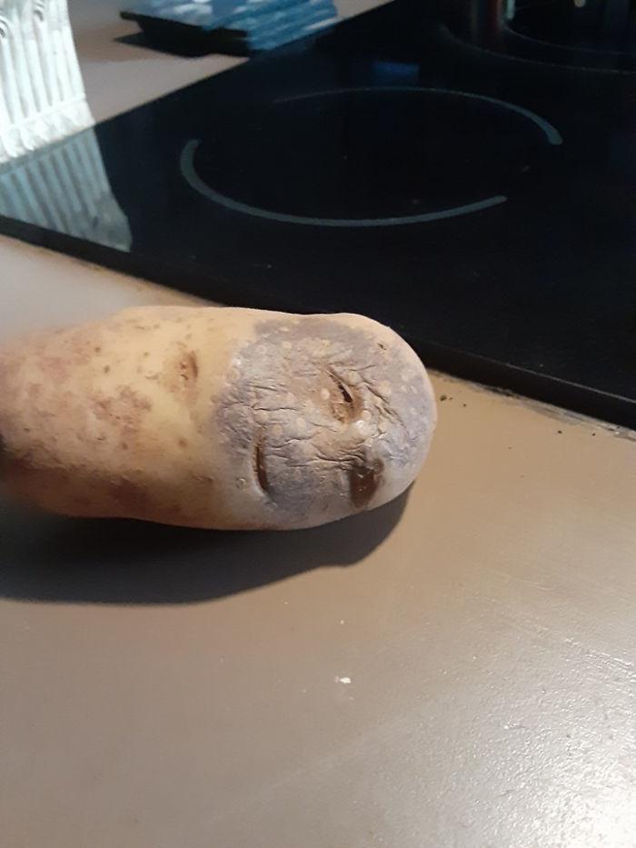 """Củ khoai tây héo này trông giống như """"tôi đã hết nghĩa vụ với cuộc đời""""."""