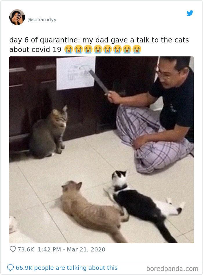 Ngày cách ly thứ 6: Ba tôi nói chuyện với lũ mèo về Covid-19.