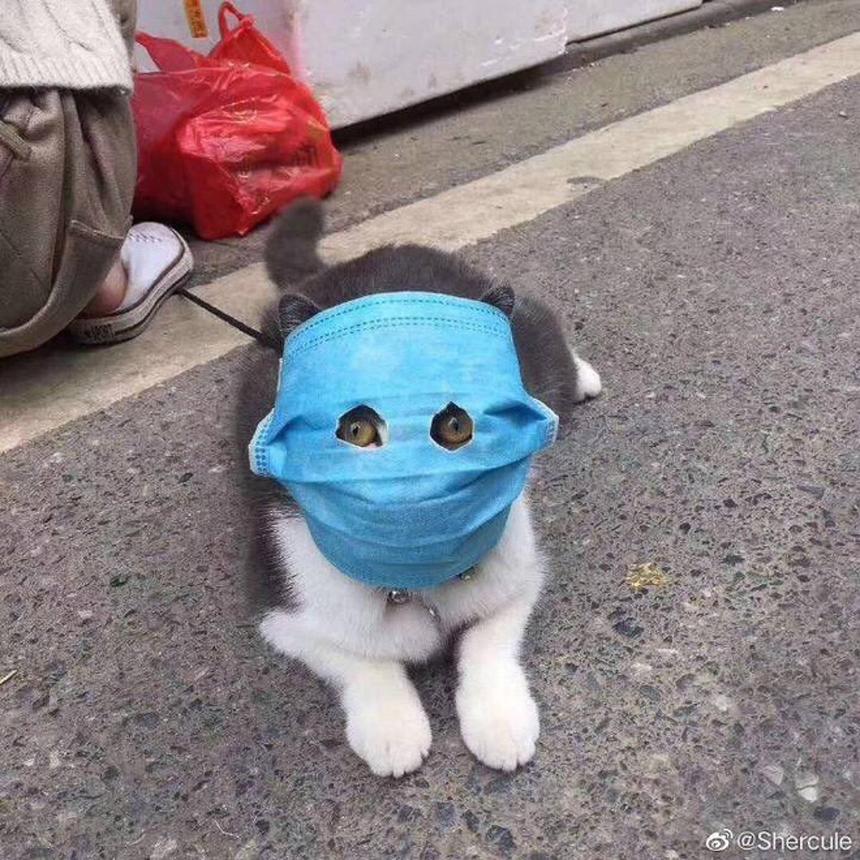 Khẩu trang cho cún cưng