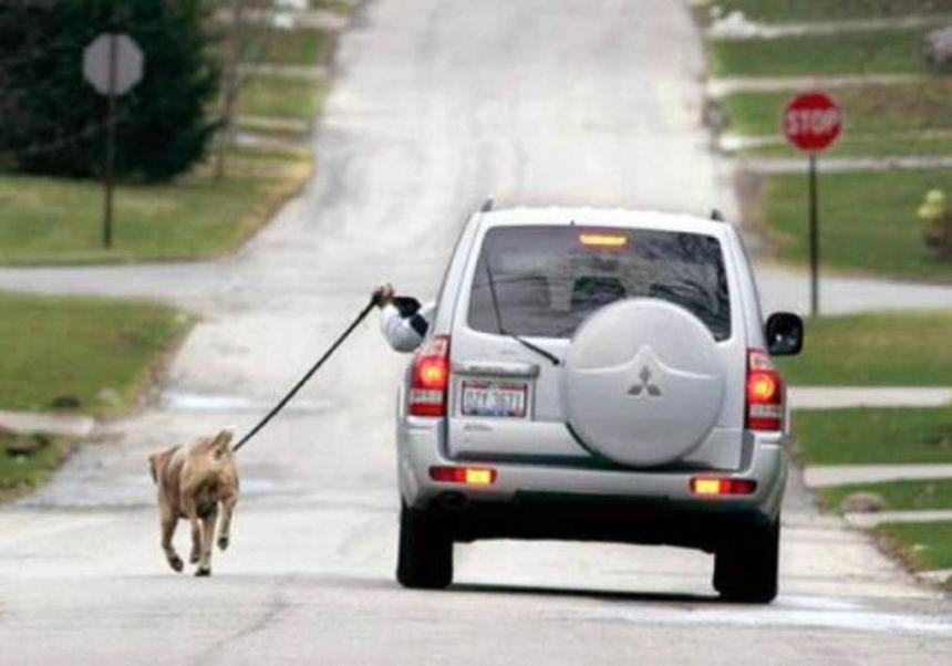 Khi bạn cần dắt chó đi dạo.