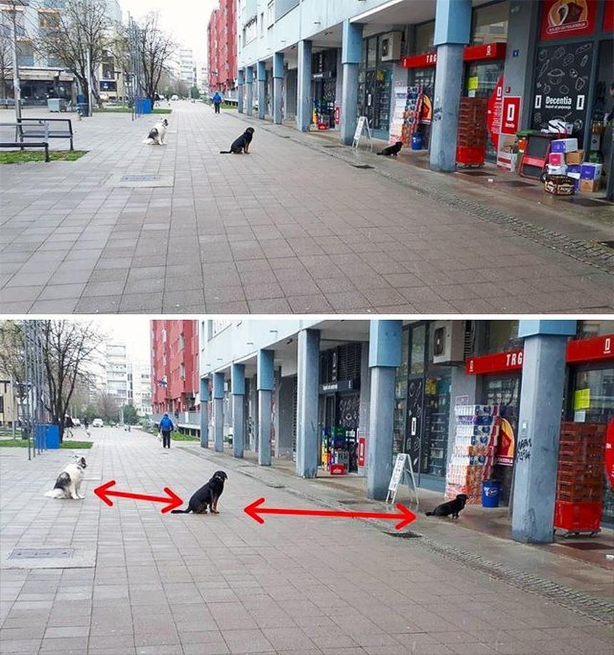 Các chú chó nghiêm túc giãn cách.
