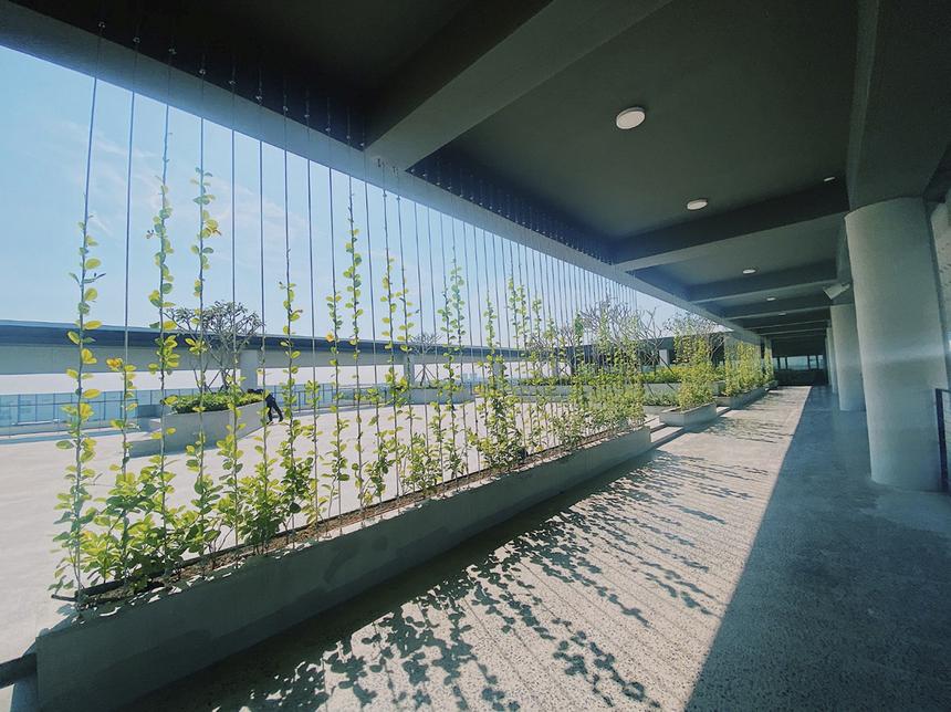 Dàn cây leo đổ bóng tại khu hành lang ngoài F-Town 3 hứa hẹn sẽ biến hóa thành một bức tường xanh mướt trong vài tháng tới, xua tan cái oi bức mùa hè.