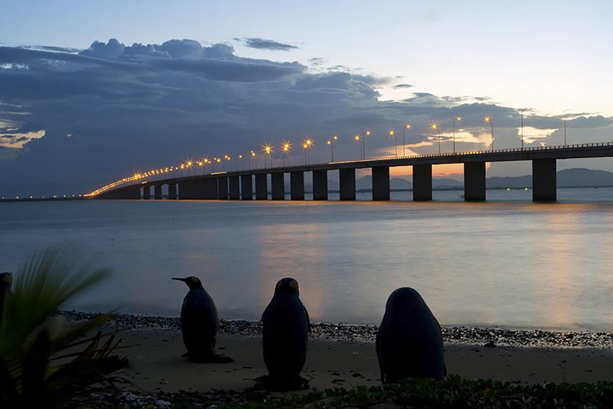 Màn đêm buông xuống, cầu Thị Nại tựa như sợi dây vắt ngang đầm Thị Nại. Những cột đèn được thắp sáng trải dài 7km đường cầu càng làm cho cây cầu thêm phần nổi bậ,t giữa không gian thoáng đãng lồng lộng gió từ biển thổi về.