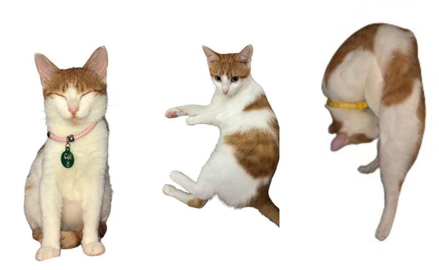 """Chị Lê Thị Minh Thái - Synnex FPT chụp ảnh dự thi với sự hỗ trợ của chú mèo Cải. """"Emxếp hình con cưng của em ra 139 rồi, Ban tổ chức có nhìn ra được hay không thì hên xui"""", chỉ dẫn đưa ra rõ ràng để Ban tổ chức có thể...nhìn ra tạo hình của chú mèo."""