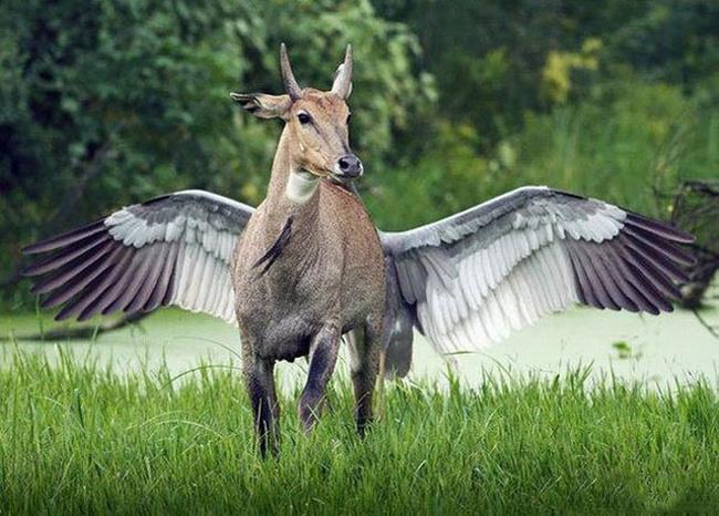 Loài mới đây, có cánh, có sừng đầy đủ cả.