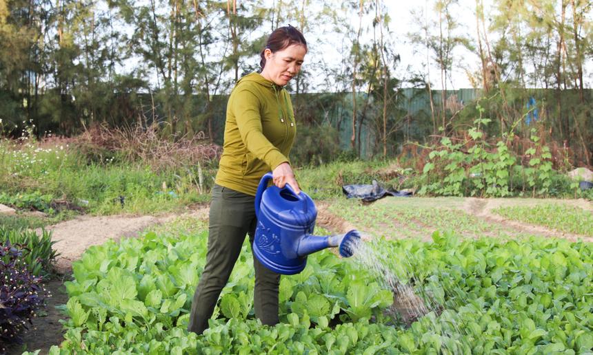 Điểm đặc biệt là rau ở đây hoàn toàn là rau sạch, không sử dụng thuốc trừ sâu hay các loại hoá chất. Cô Dung cũng áp dụng phương pháp luân canh, tức vừa thu hoạch vừa gieo hạt, giúp vườn của cô lúc nào cũng phủ đầy màu xanh.