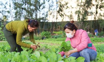 Vườn rau sạch miễn phí 'lọt thỏm' giữa F-Complex