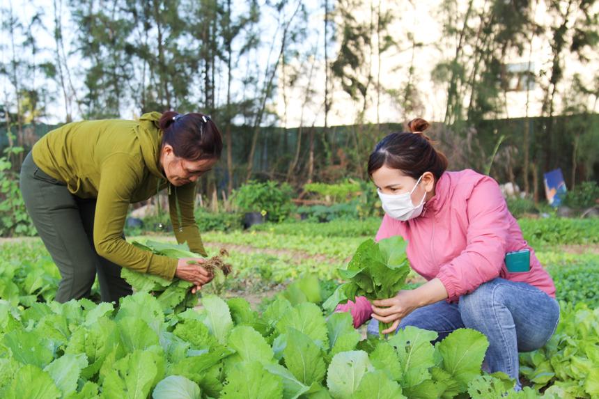 """Sau giờ làm, cô lại tranh thủ khoảng 30 phút để tưới cây, gieo mầm,... Trồng rau mấy chục năm nên cô Dung đã quá thạo việc. """"Tranh thủ chút thời gian cuối giờ chiều mà có rau sạch để ăn, chứ đất ở F-Complex rất đẹp, trồng cây nào là xanh tốt cây ấy"""", cô cho hay. Ban đầu, khu vực này chỉ dùng để ươm cây cảnh, song nhân dịp Tết cận kề, cô Dung muốn trồng thêm rau xanh để chia sẻ cho CBNV nhà Phần mềm."""