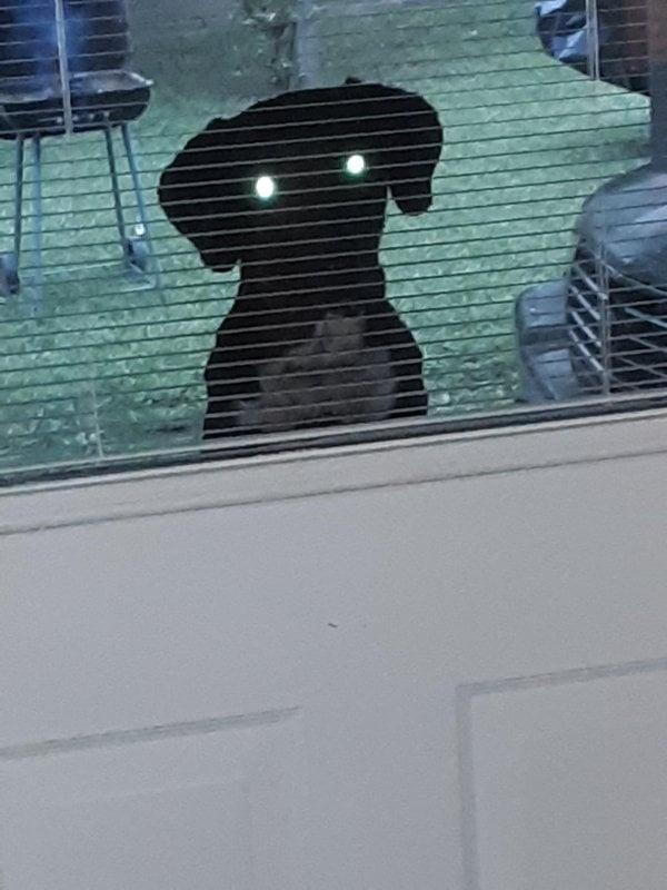 """""""Tôi đã chụp lại khoảnh khắc con chó hàng xóm đang nhìn trộm qua cửa sổ, nhưng thành quả trông hơi ma mị."""""""