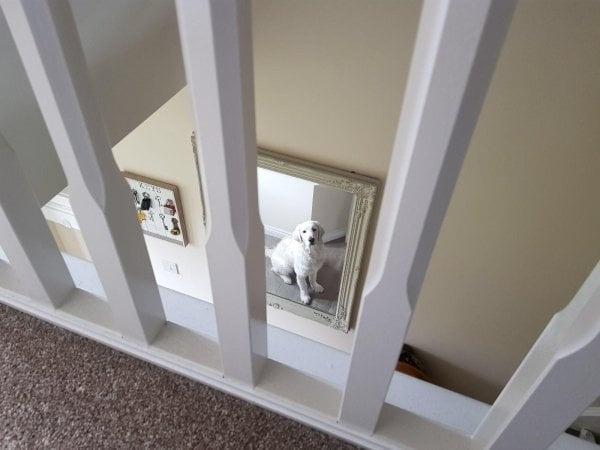 """""""Chó cưng nhìn trộm tôi qua gương."""""""
