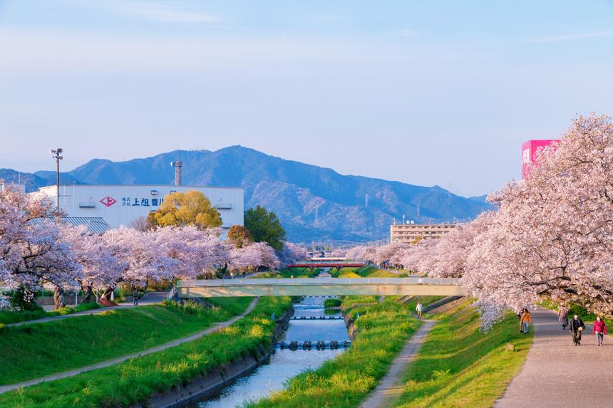 Dấu hiệu đầu tiên của mùa xuân ở Nhật Bản là khi bản tin thời tiết trên tivi chiếu bản đồ quốc gia cho thấy những nơi hoa anh đào nở. Từ thời điểm đó, tất cả bản tin thời tiết sẽ theo dõi diễn biến nở rộ của hoa anh đào trên khắp nước Nhật cho đến tận khi những cánh hoa cuối cùng đã tàn. Ảnh: LamVV, chụp tại Toyokawa, tỉnh Aichi