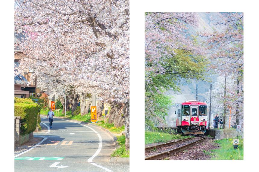 Hoa anh đào nở rộ tạo vẻ đẹp tráng lệ cho mỗi cung đường Nhật Bản. Ảnh: LamVV
