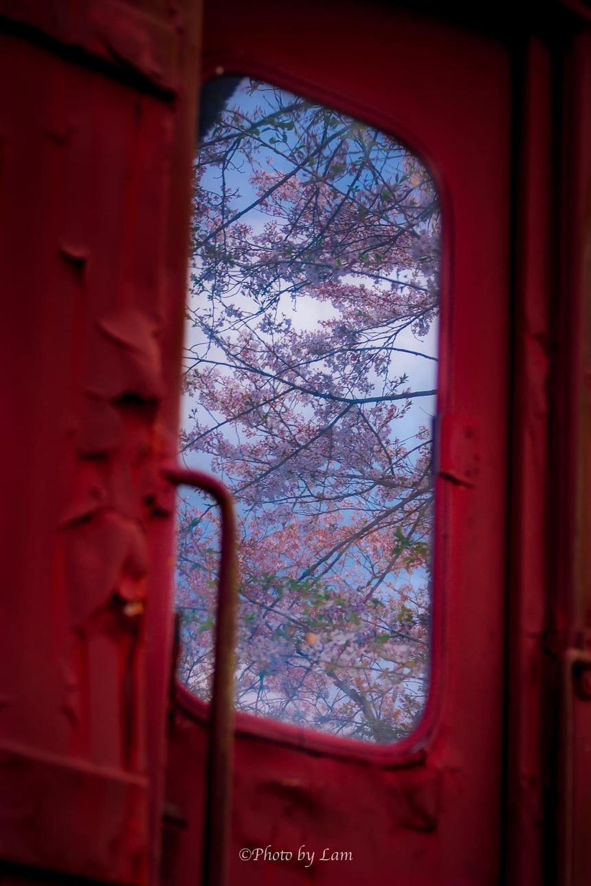 """<p> Nhiếp ảnh gia Vũ Văn Lâm tiếp tục chứng tỏ sức sáng tạo nghệ thuật dồi dào với tác phẩm """"Mùa xuân về bên ô cửa nhỏ…!"""", nhìn ra những rặng hoa anh đào trên nền trời biếc xanh của nước Nhật.</p>"""