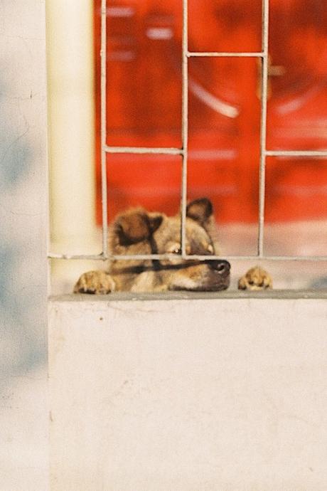 Cùng người F ngắm bình yên 'qua khung cửa sổ'