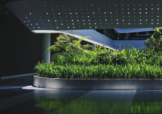 """<p class=""""Normal""""> Thiết kế thông thoáng, đón gió trời góp phần làm mát toàn bộ không gian bên trong. Mảng xanh ở trung tâm đóng vai trò lọc không khí, giữ ẩm và thấm nước mưa.</p>"""