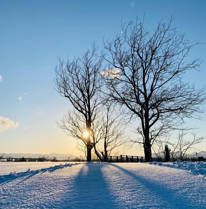 """<p class=""""Normal""""> """"Giọt nắng dũng cảm của mùa đông"""" rọi qua đám cành cây trơ trọi, khẳng khiu được anh<span>Nguyễn Việt Hùng chụp giữa mênh mông tuyết trắng.</span></p>"""